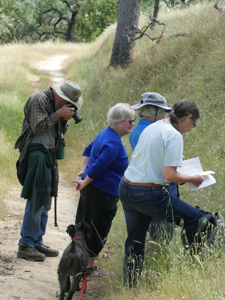 Bill led a wildflower walk on the north side of Shell Ridge in April.  Our friend Earl from the WC Open Space Foundation is photographing a flower and Lesley and Janet are discussing  a plant ID.  Janet, our friend from CNPS,  always carries a reference book on outings.