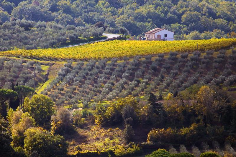 188 Olive and grape farms in Certaldo, Italy