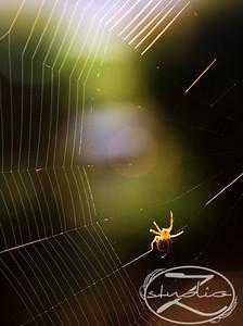 SpiderWeb0002