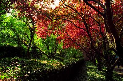 Central Park Flowers 03