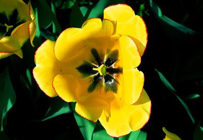 Central Park Flowers 02