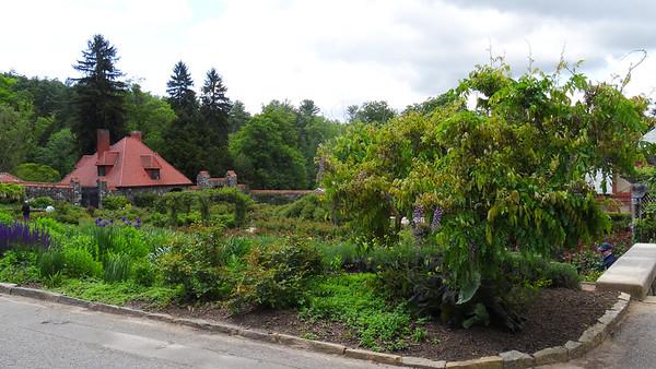 Wisteria at Biltmore Garden