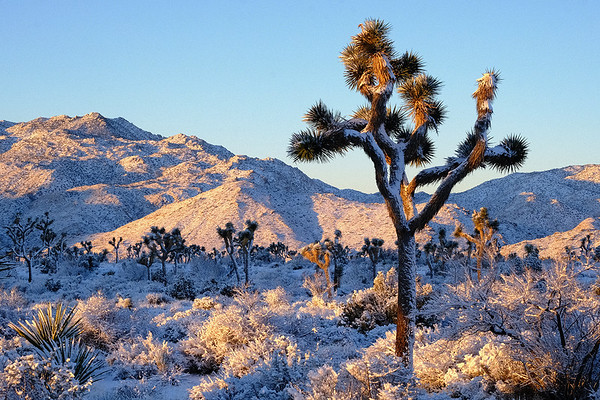 Joshua Tree National Park, CA.
