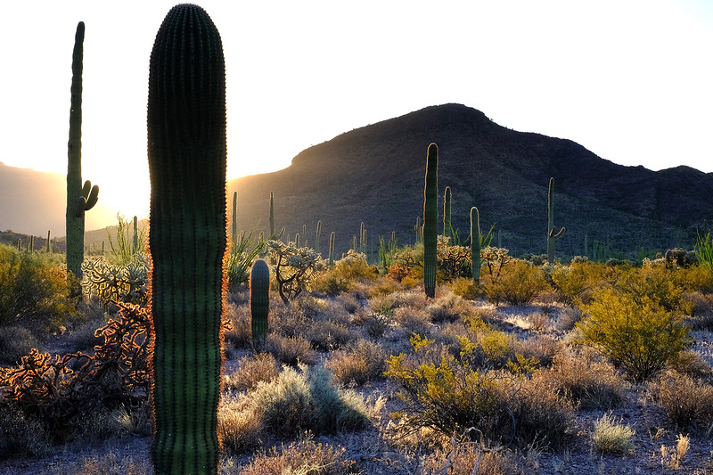 Organ Pipe Cactus National Monument, Arizona. (1 of 2).<br /> <br /> I watched the sun rise over the most beautiful desert I've ever seen...