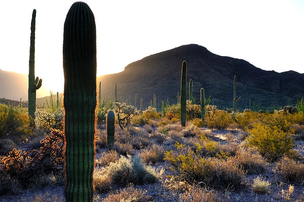 Organ Pipe Cactus National Monument, Arizona. (1 of 2).  I watched the sun rise over the most beautiful desert I've ever seen...