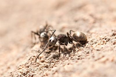 Ant Pic: M.White