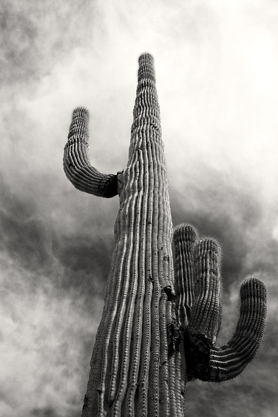 Sonoran Desert National Monument, Arizona.