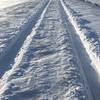 Snowy Owl tracking, Saskatchewan Canada