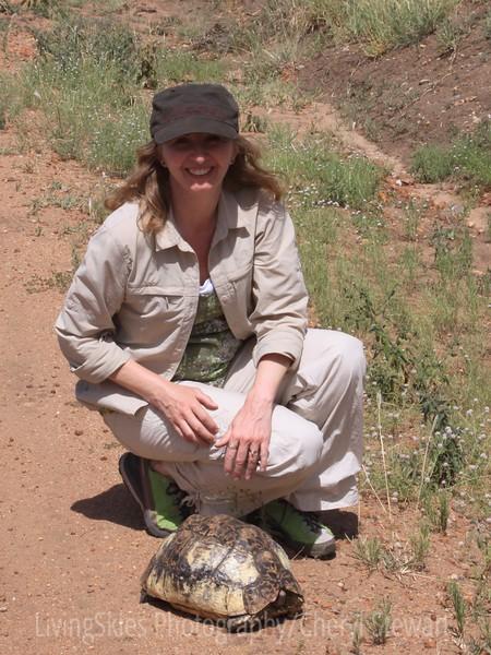 Leopard tortoise, Serengeti