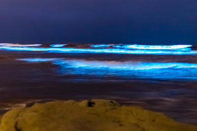 Some more photos of the bioluminescent tide at Dog Beach (Del Mar North Beach) in Del Mar.