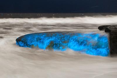 Glow Rock: Bioluminescent Tide in La Jolla