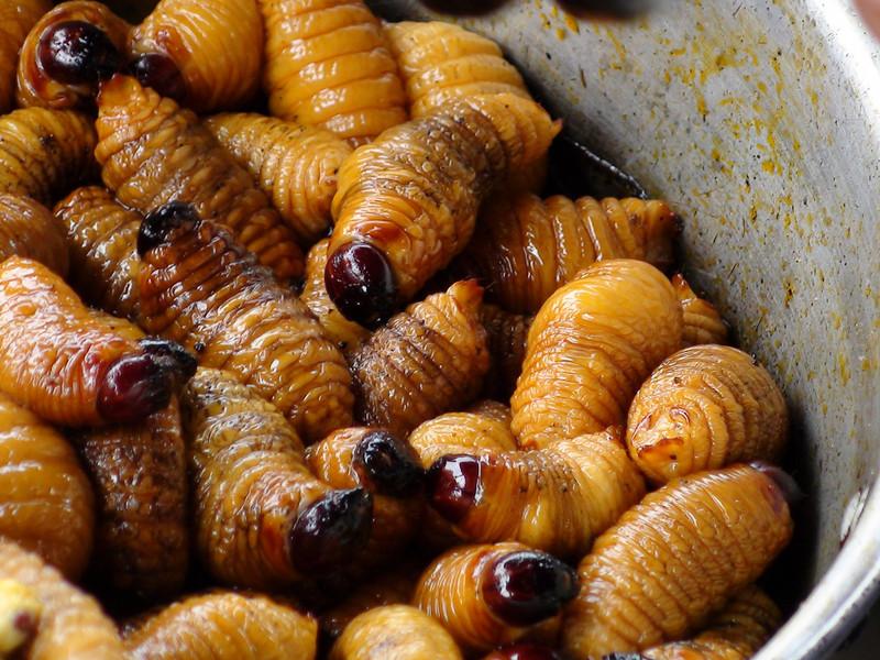 Larvas de escarabajo, que se alimentan del fruto de las palmeras, forman parte de la dieta.