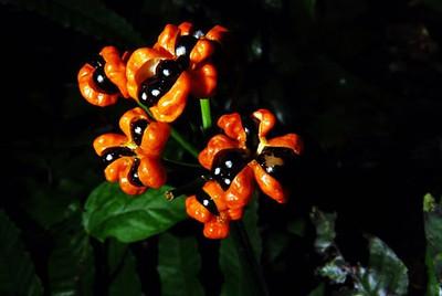 Estrategi para el Bioma Amazónico