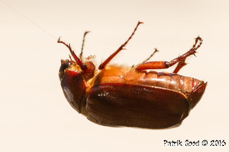 Note the mite/tick!