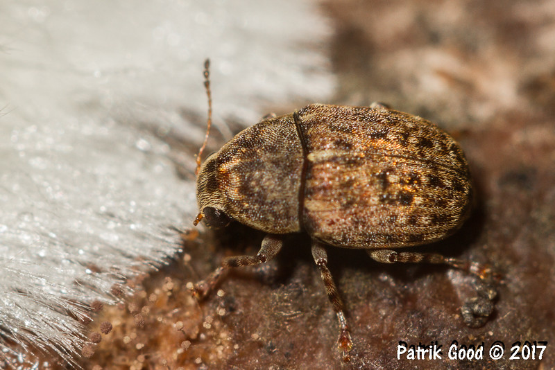 Size about 5mm. On mould.