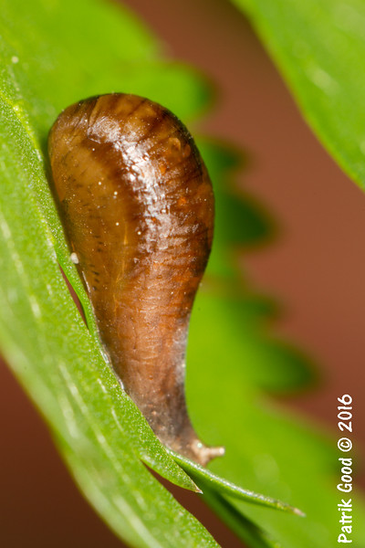 Probably a chrysalis of some insect