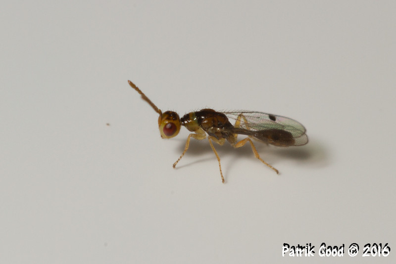 Size 4mm, body 3mm. Original resolution 3000x2000, no selective manipulation of photo. White plastified paper used as backdrop experiment when animal jumped on it.