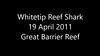 Whitetip Reef Shark - Trianodon obesus