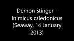 Demon Stinger - Inimicus caledonicus