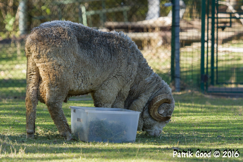 Captive animal