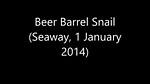 Beer Barrel Snail - Tonna variegata