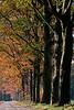 Nieuwkerk,Ooievaarsnest,nature reserve,natuurreservat,réserve de naturem,tss punt 2 en 6,the Netherlands,Nederland,Pays-Bas