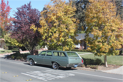 Biquette and yellow-leafed trees - driver side rear view