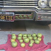 Apples reflected in bumper