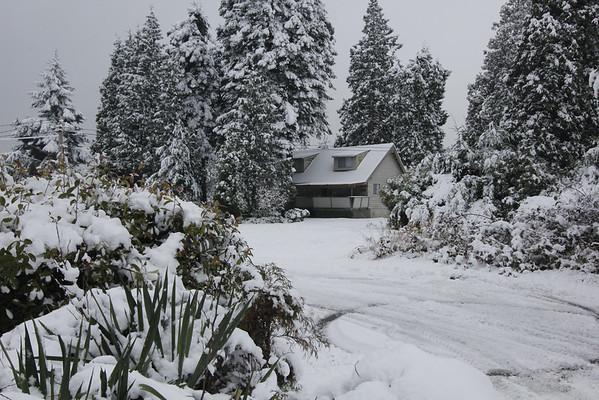 Birch Bay Winter