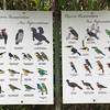 Buenaventura Bird Signs