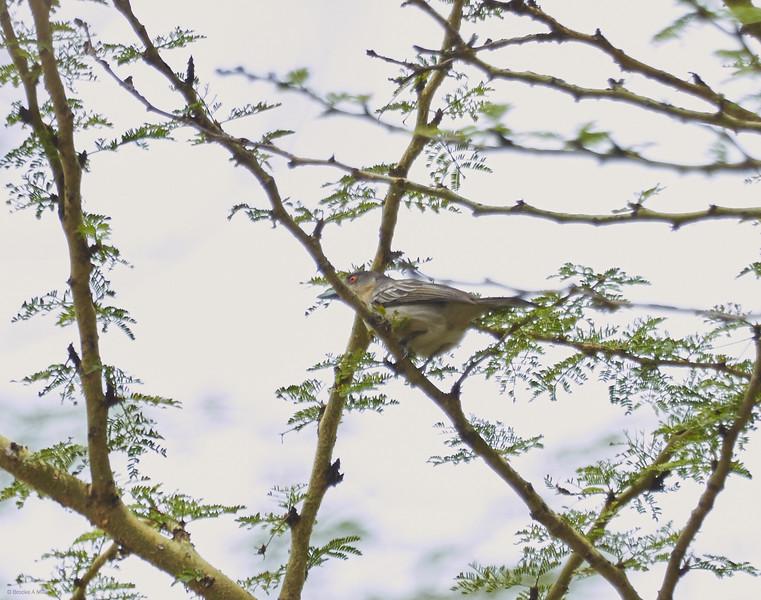 Lake Nakuru National Park, Kenya, 20-Feb-2014
