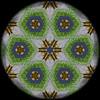 Evening Grosbeak Mandala