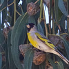 Male Lawrence's Goldfinch, Dunne-San Felipe Rd Hollister, Santa Clara County, 3-April-2013