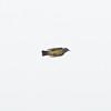 Cassin's Kingbird in Flight, Dunne-San Felipe Road, Hollister, Santa Clara County, 6-April-2013