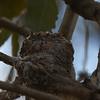 Anna's Hummingbird Nest