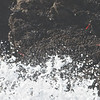 A pair of Black Oystercatchers forage among the surf on the rocks off Pigeon Point Lighthouse, 1-6-2013