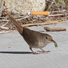 House Wren with Insect, Mono Lake Visitor's Center