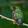 Hummingbird shot in my backyard on 091912.  No Flash.