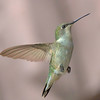 Ruby-throated Hummingbird, female on my oldest son's back porch on Lake Livingston.  Flash.