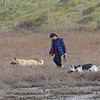 Man with Off-Leash Dogs in Wetland Mitigation Area, 1-Jan-2017