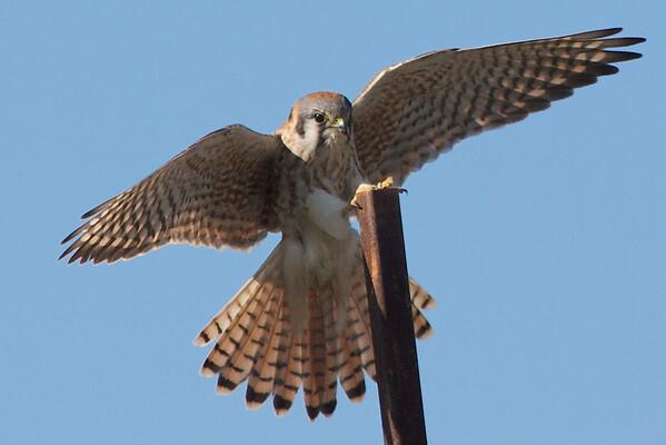 Favorite Birding Pics