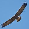 Golden Eagle, Santa Clara County, Weller Road