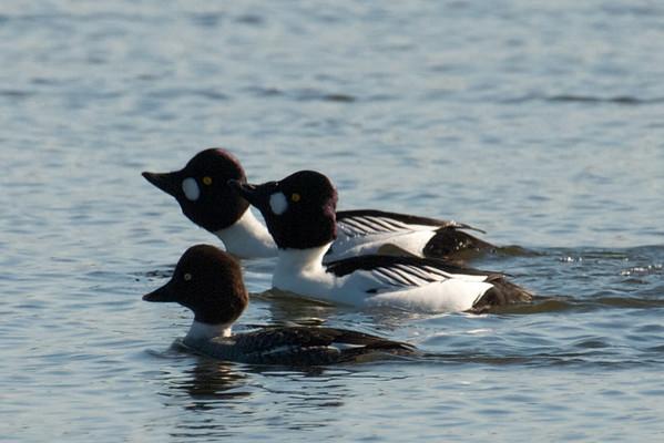 2012-01-01 Shoreline Lake