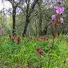 Wildflower field at Pulgas Ridge OSP