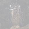 Great Horned Owl in the Fog at Chimney Rock, Pt Reyes National Seashore, 26-Oct-2013