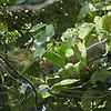 Reptile in a Tree