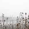 Teasle and Fog