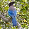 Beautiful striped blue feathers!