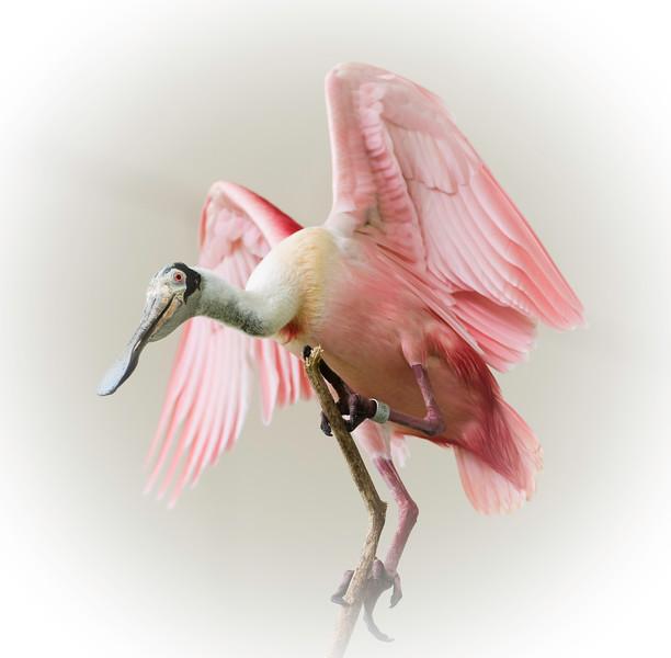 Pinkish Hues