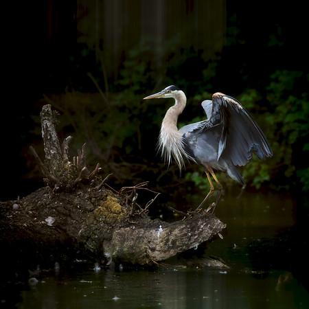 Bird Life